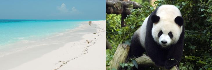 Tanzania and Chengdu