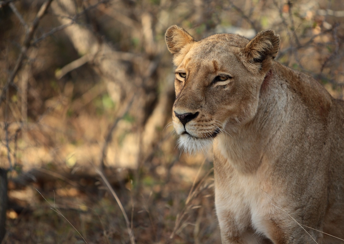 10 things I loved about my Safari trip in Southern Africa